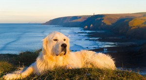 Dog friendly holiday cottage in Cornwall