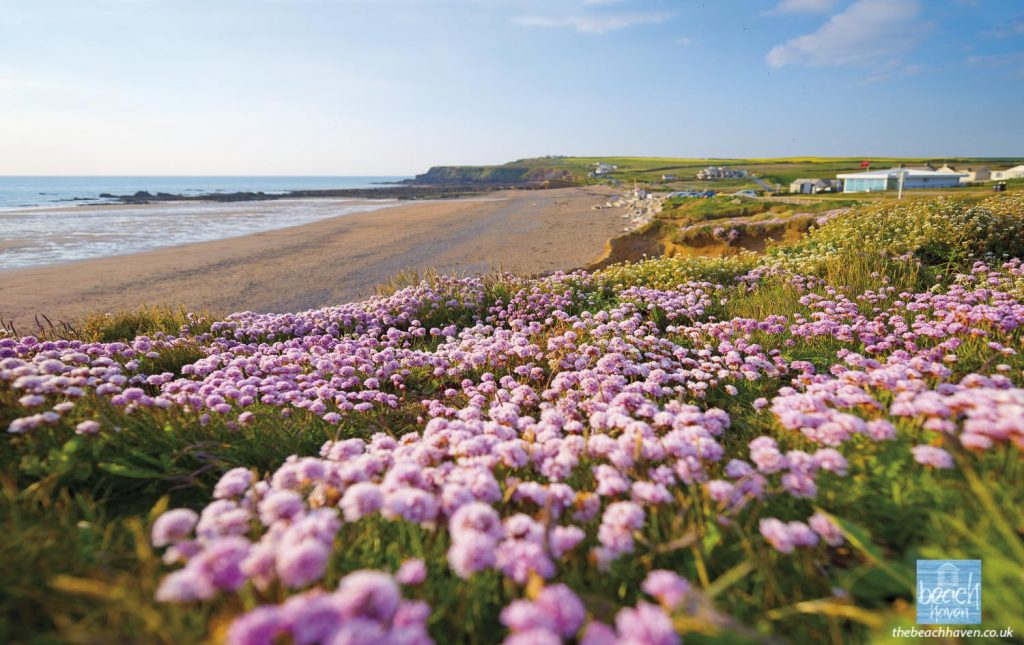 Widemouth Bay in the spring
