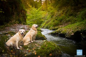 Lydford Gorge - A Gorge-ous Day Out!