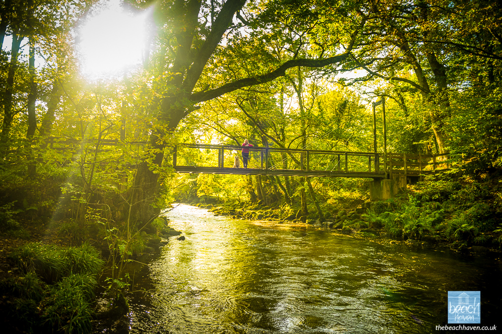 Suspension bridge near Castle Drogo.