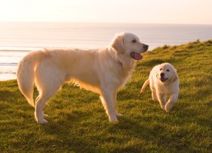 Dog friendly holiday cottage in Bude?
