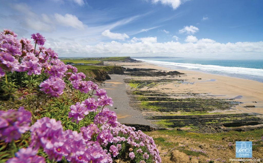 Thrift on the cliffs at Maer looking south to Bude Bay