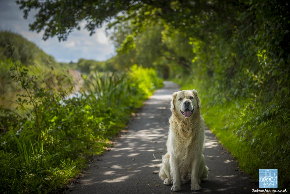 Finlay enjoying his walk on the Bude Canal
