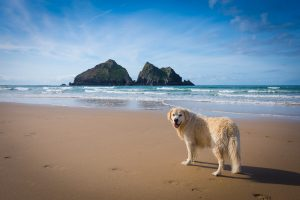 Relaxed Restrictions for Dogs on Cornwall's Beaches